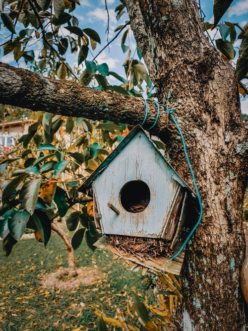 Free stock photo of backyard, bird house, three