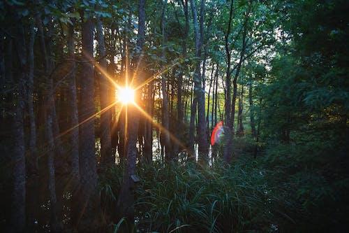 คลังภาพถ่ายฟรี ของ lensflare, กลางแจ้ง, ช่วงแสงสีทอง, ดวงอาทิตย์