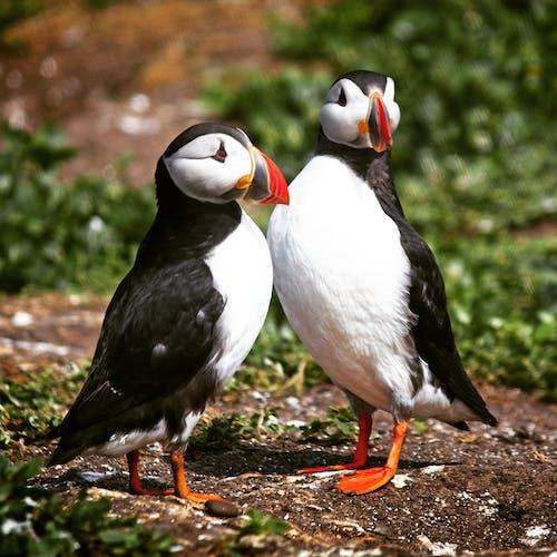 deniz kuşu, hayvan, kuş, kuşlar içeren Ücretsiz stok fotoğraf