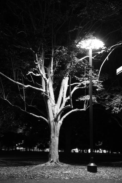 Photos gratuites de arbre illuminé, illuminé, zone éclairée