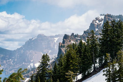 Icy Mountain Slope With Pine Trees