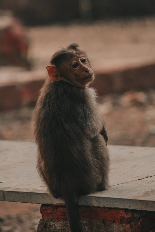 Imagine de stoc gratuită din animal, faună sălbatică, fotografie, fotografie cu animale sălbatice