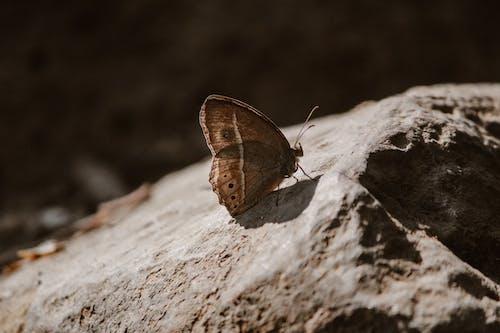 Imagine de stoc gratuită din brun, fluture, fluturi, granit