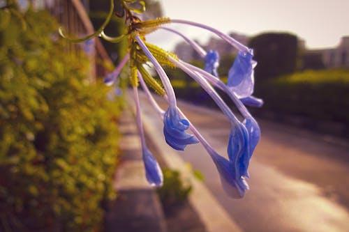 4k 바탕화면, 낮의 빛, 비 내린 후, 파란 꽃의 무료 스톡 사진