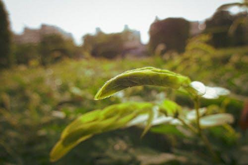 4k 바탕화면, 낮의 빛, 비 내린 후, 초록색 잎의 무료 스톡 사진