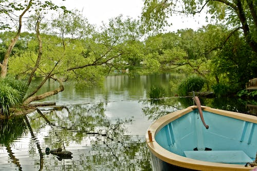 Free stock photo of boat, calm waters, pond