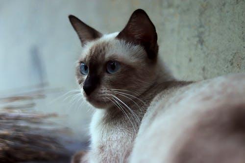 Evcil Hayvan, hayvan portresi, kedi, kediler içeren Ücretsiz stok fotoğraf