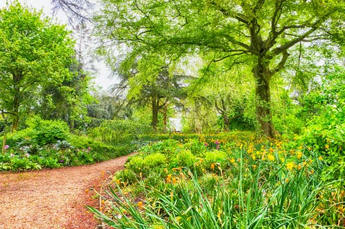 Free stock photo of flower garden, foot path, forest, woodland