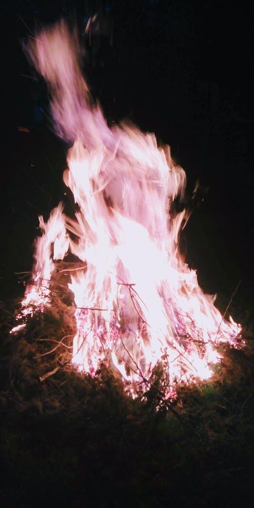 Foto d'estoc gratuïta de branques d'arbres de nadal cremant, foc