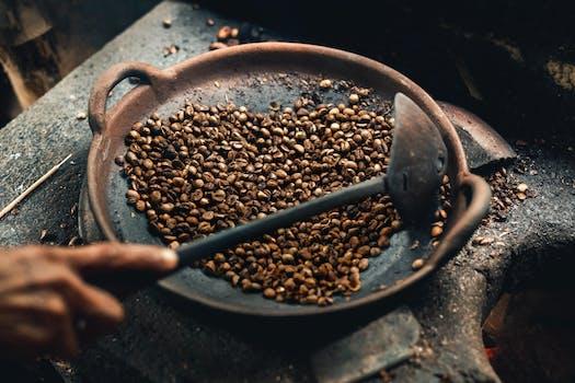 Taste Kopi Luwak coffee at a coffee plantation