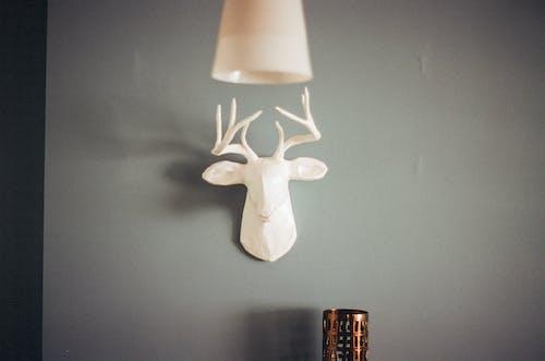 Immagine gratuita di camera, cervo, interior design, interni