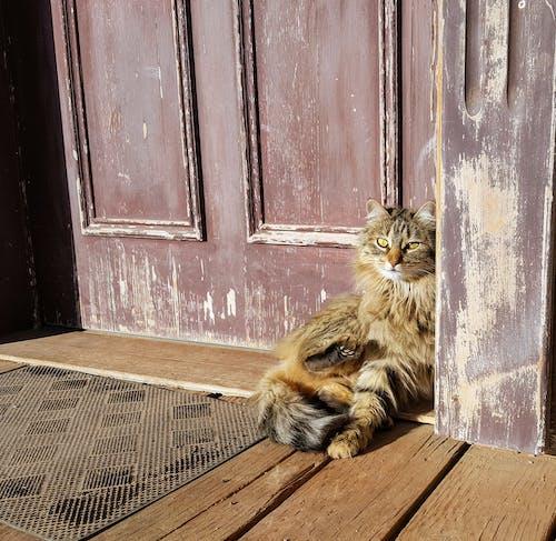 Безкоштовне стокове фото на тему «волохатий, двері, дверний отвір, Денне світло»
