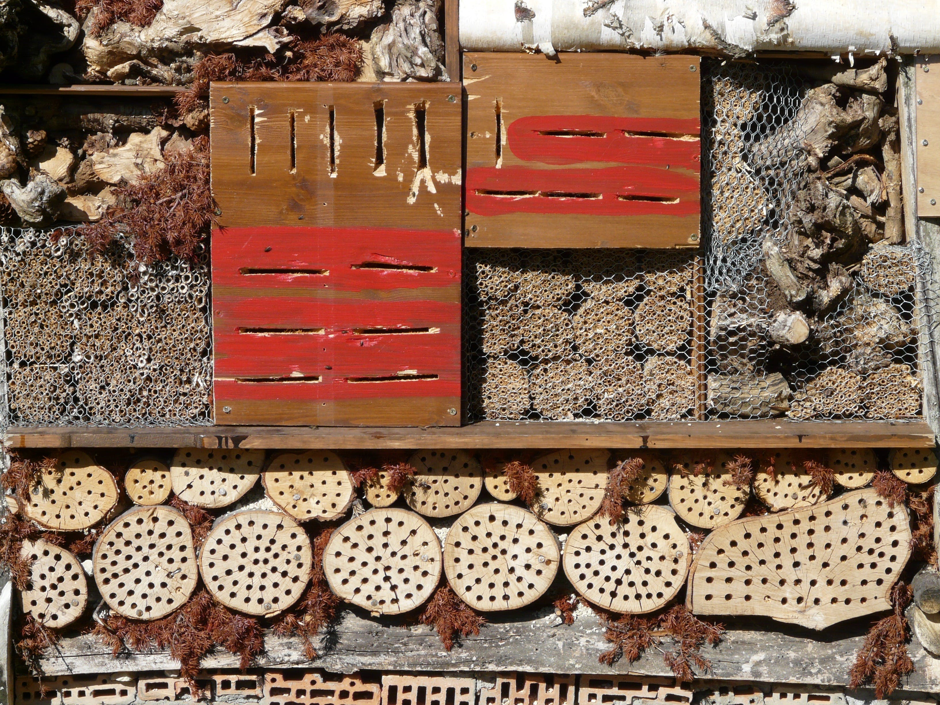 Free stock photo of wood, bricks, insect, wire