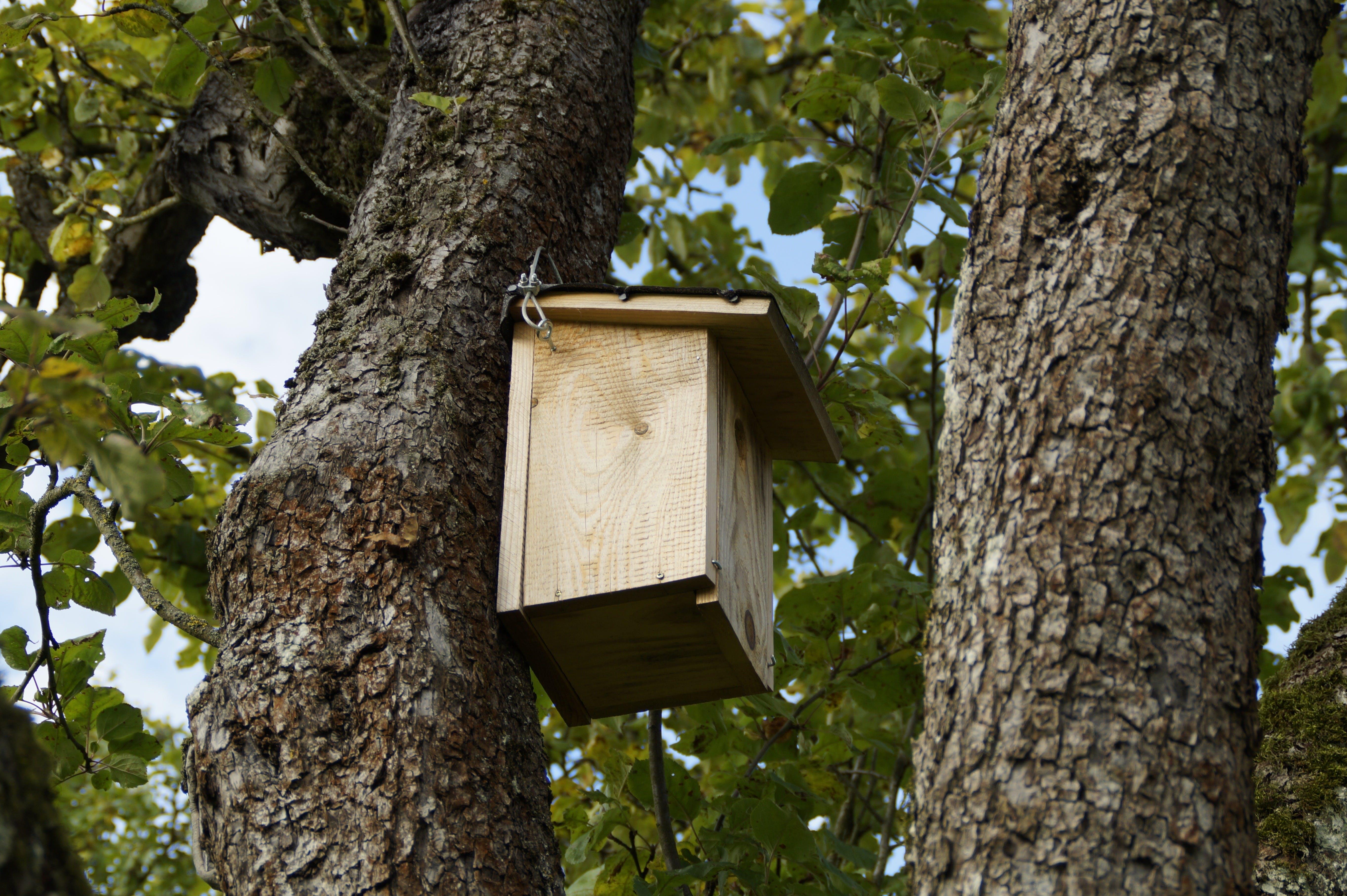 Free stock photo of bird, tree, birds, log