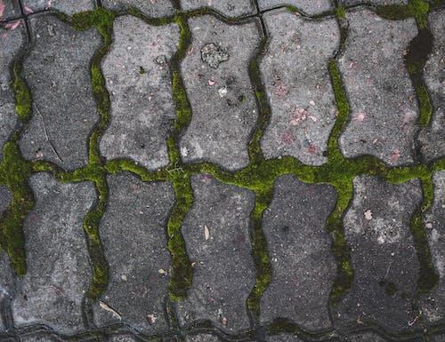 Gratis lagerfoto af asfalt, flise, grå, grøn