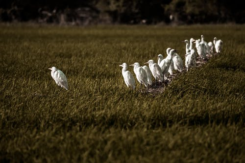 Foto stok gratis alam, bidang, burung-burung, fotografi binatang