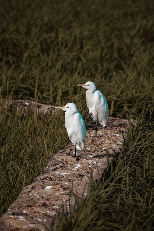 Foto stok gratis alam, bagus, bidang, binatang