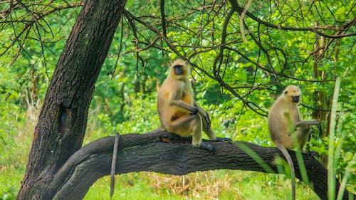 Бесплатное стоковое фото с зеленый фон, лес, обезьяна, обезьяна на дереве