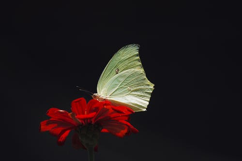Macro Photography of Butterfly Perching on Flower