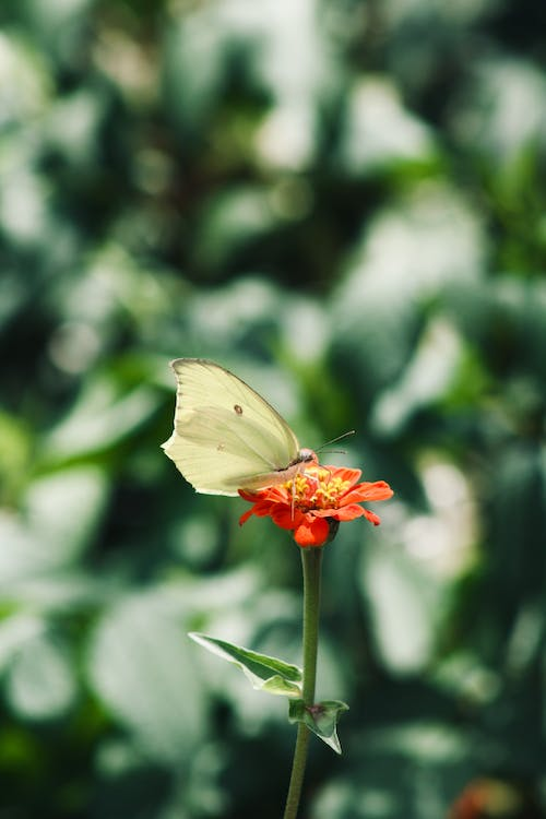 Selective Focus Photo of Butterfly Perched on Flower