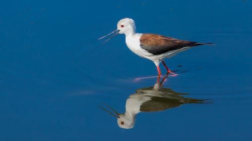 Бесплатное стоковое фото с водные волны, голубые воды, птица