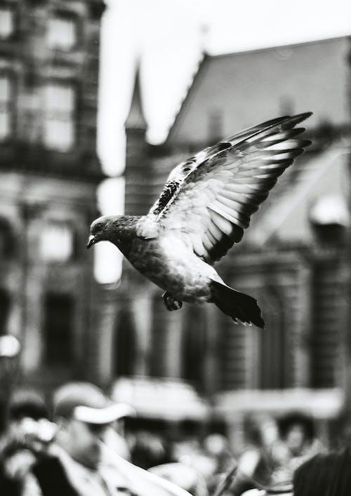 Δωρεάν στοκ φωτογραφιών με Άμστερνταμ, ασπρόμαυρη φωτογραφία, ασπρόμαυρο, ζώα