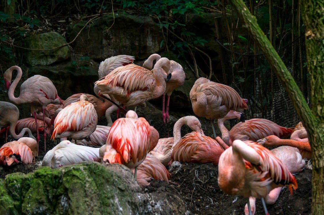 Free stock photo of beauty in nature, bird, flamingo