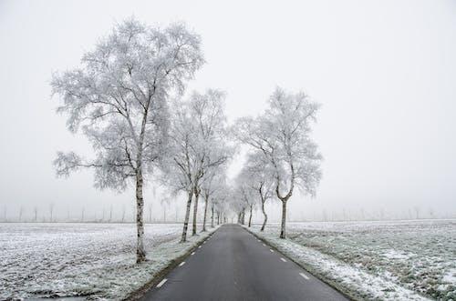 Kostnadsfri bild av dimmig, dyster, frost, frostig