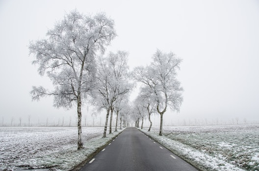 Free stock photo of cold, snow, road, dawn