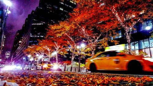 ağaç, apartman binası, arabalar, bina içeren Ücretsiz stok fotoğraf