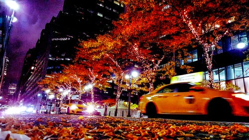 Fotos de stock gratuitas de árbol, carretera, coches, cruce de caminos