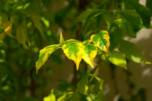 Free stock photo of green, leaves, plants