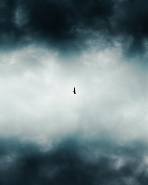Low-Angle Photo of Bird Flying Across Dark Clouds