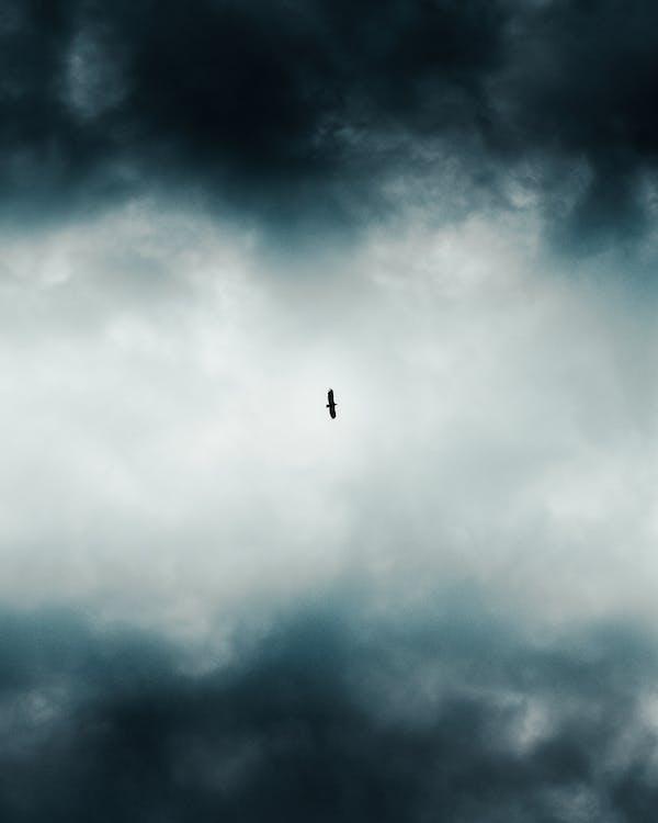 Low Angle Foto Eines Vogels, Der über Dunkle Wolken Fliegt