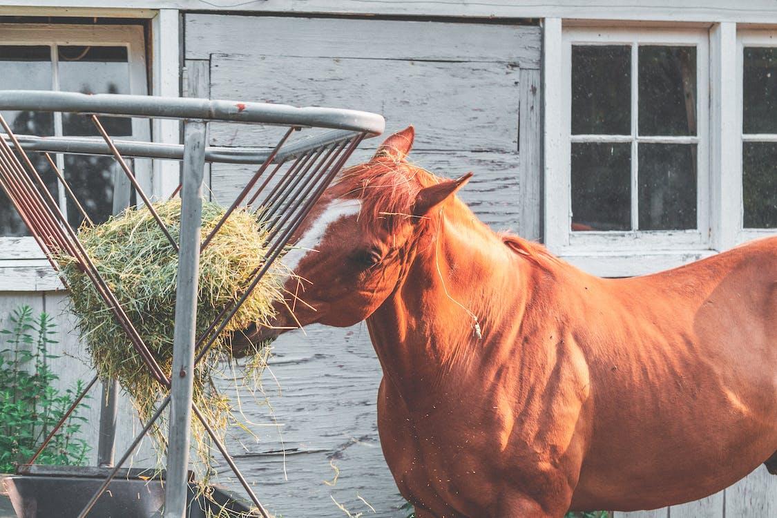 animal, bestiar, cabellera