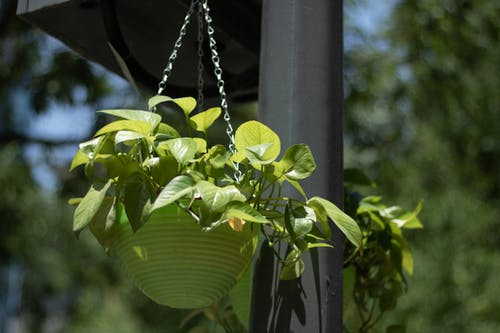 Безкоштовне стокове фото на тему «домашня рослина, ліхтарний стовп»