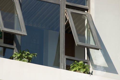 Безкоштовне стокове фото на тему «вікно, домашні рослини»