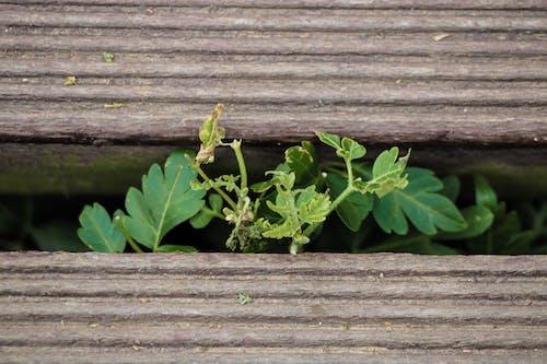 Безкоштовне стокове фото на тему «дерев'яний, листя»