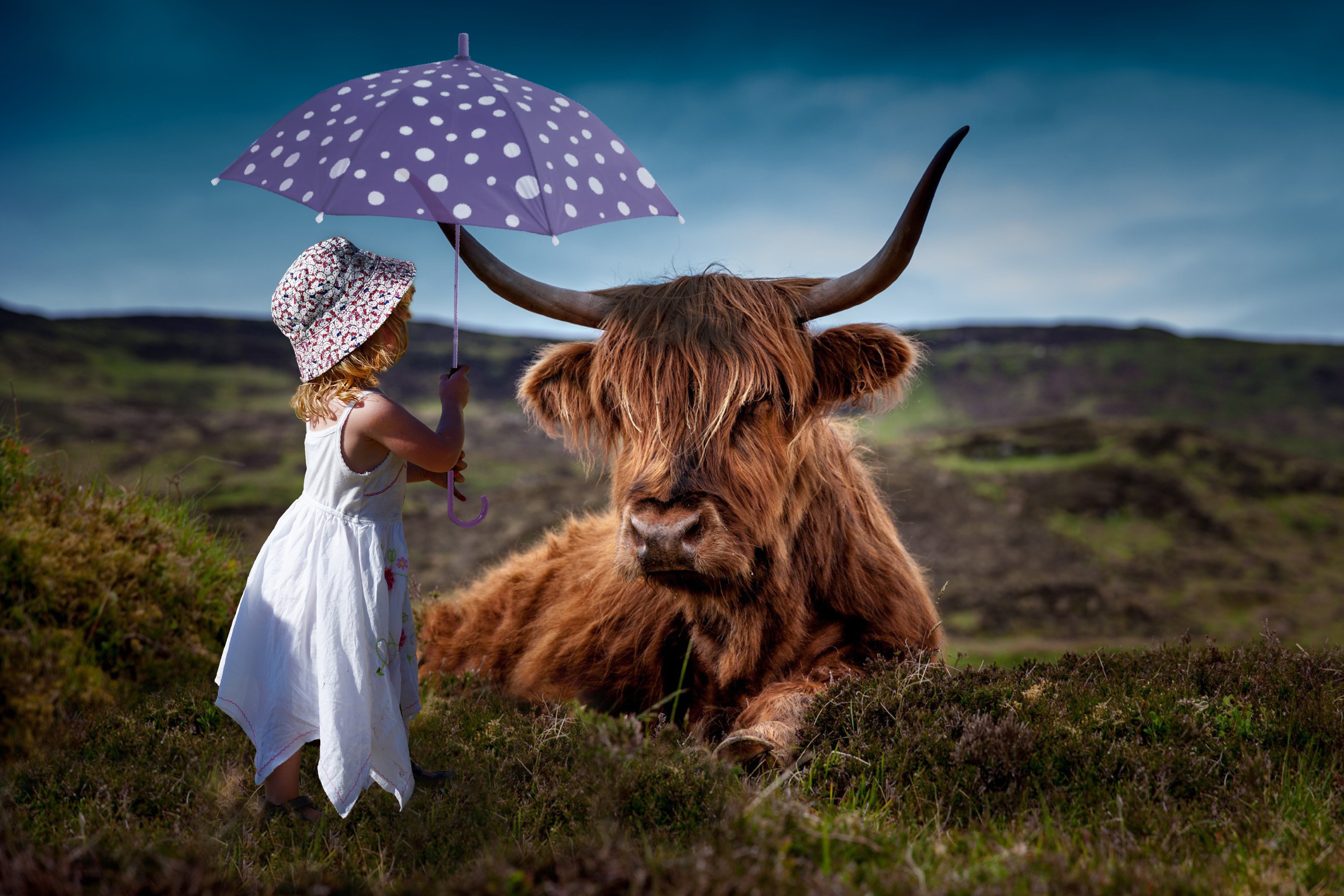 Free stock photo of room, child, decoration, cow