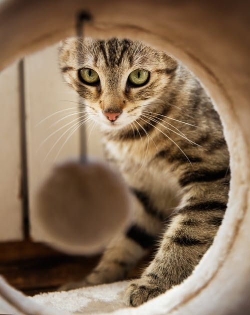 Brown and Black Tabby Cat on Cat Cave