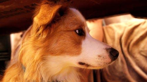 Immagine gratuita di animale, calore, cane, pelliccia