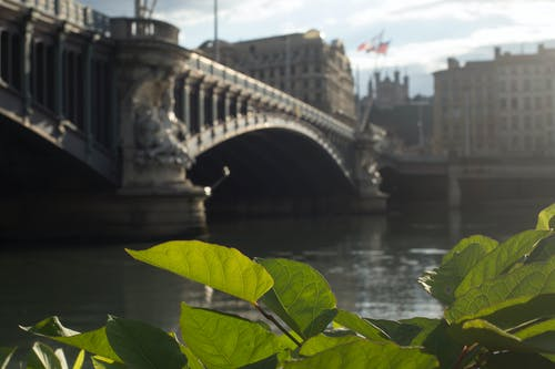 Ảnh lưu trữ miễn phí về cầu, kênh, Nước, paris