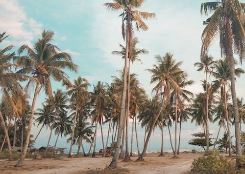 Foto profissional grátis de beira-mar, coqueiro, foto de viagem, ilha