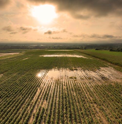 คลังภาพถ่ายฟรี ของ การทำฟาร์ม, การสะท้อน, การเกษตร, ตอนเช้า