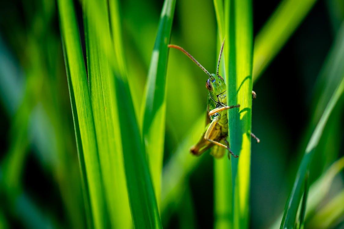 Close-Up Photo of Grasshopper on Leaf