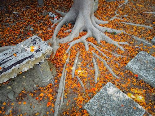 Foto profissional grátis de árvores, folhas, fundo laranja, laranja