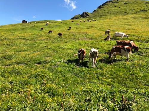 çıkmak, dağ, doğa, güzel içeren Ücretsiz stok fotoğraf