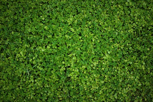綠草地, 自然美, 草 的 免費圖庫相片