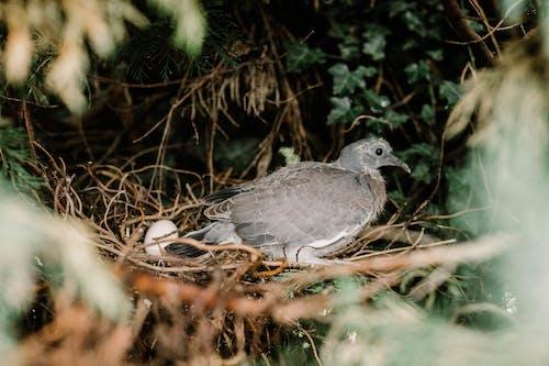 天性, 巢, 樹, 樹叢 的 免费素材照片