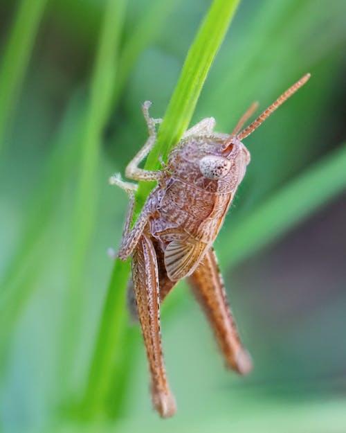 Безкоштовне стокове фото на тему «дрібна тварина, зелений, комаха, коник»